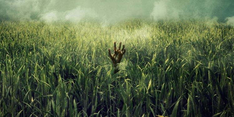 "Netflix adaptará la novela de terror ""In the Tall Grass"""